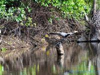 Pantanal Wilderness (Brésil en  camping-car)
