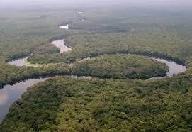 CERBAC :  Centre  d'Etudes et de Recherches du  Bassin du Congo