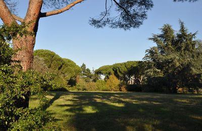 Toulouse : une journée pour sensibiliser à la protection des arbres