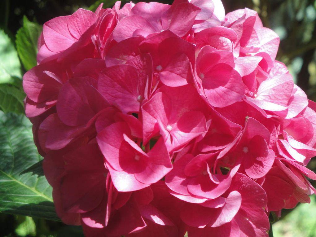 Les fleurs de l'été.