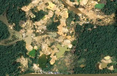 Brésil:  La communauté Yanomami attaquée par des mineurs armés