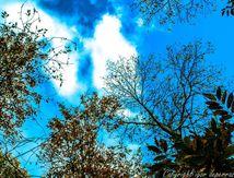 Féerie d' automne avec son panier
