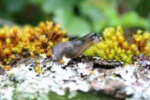 Permaculture : Cultiver avec les Limaces et les Escargots