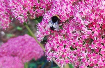 Des abeilles ...