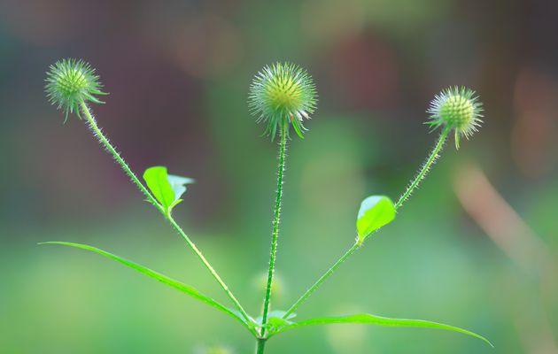 Qu'est-ce que la Naturopathie Vitaliste ?