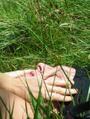 lechantdesplantes.over-blog.com