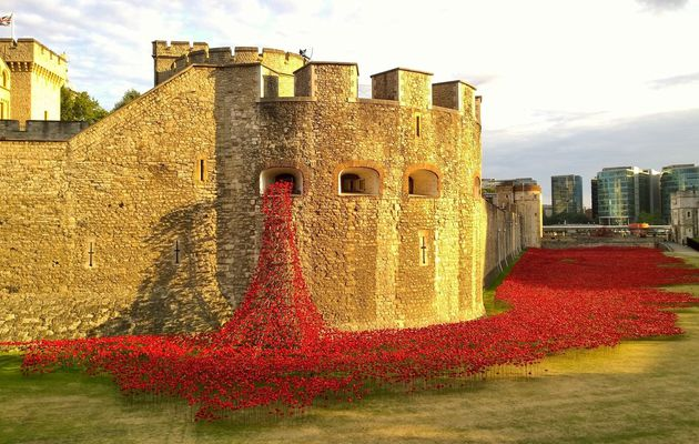 Les coquelicots de la Tour de Londres! / The Tower of London Poppies!