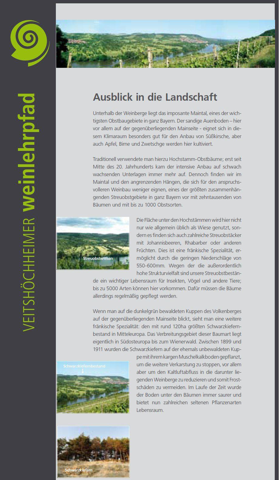 Veitshöchheimer Sonnenschein inmitten des Wein-, Natur- und Kulturlehrpfades der Gemeinde