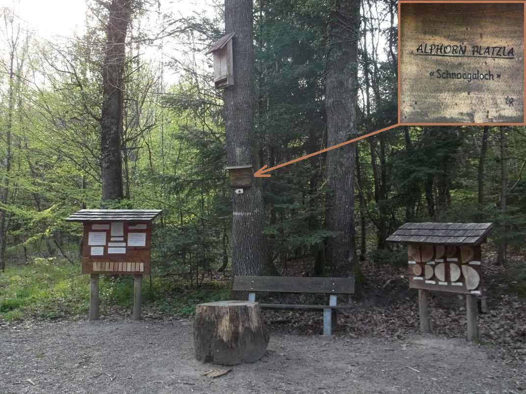 BERRWILLER : CANTINE ZELLER ET REHFELSEN (R 414) - 12,1 km - D+ 591 m - 3 h 45 mn - 3/6