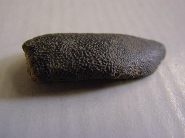 """<p></p> <p>Les chimères ou holocéphales sont des sélaciens très primitifs, quasiment inchangés depuis le Dévonien.</p> <p>On découvre surtout leurs dents (ou triturateurs), parfois des portions de mandibule incluant plusieurs dents.</p> <p>Toutes ces pièces appartiennent à ma collection personnelle.</p> <p>Bonne visite !</p> <p>Phil """"Fossil""""</p> <p></p>"""