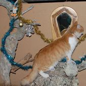 Le miroir en bois de rose et Dame Chachourite - l'exposition de l'entre-fêtes