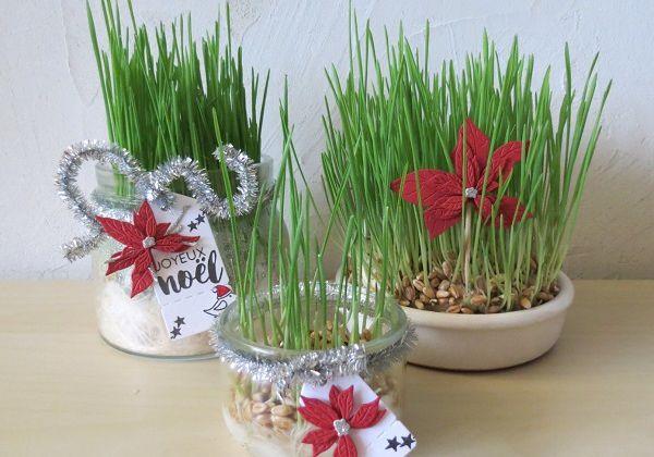 Nos petit pots de blé