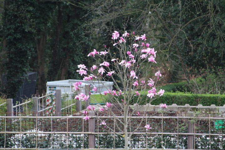 Parc Sobieski/Jardins du fleuriste/Parc Colonial