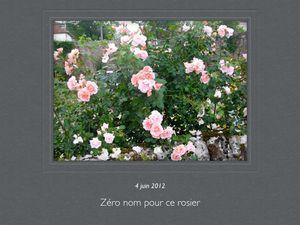 Ces boutures proviennent du jardin de mes grand-mères. Si vous identifiez cet arbuste et ce rosier...