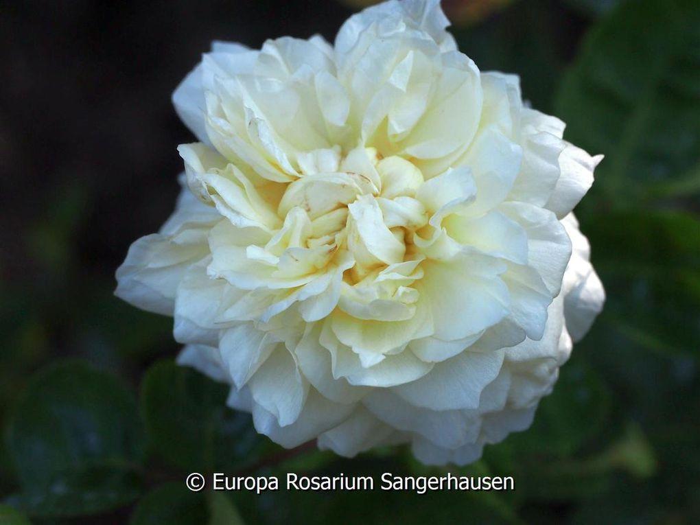 photo Europa Rosarium Sangerhausen