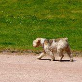 Humour Hirsutisme: Chien, Promenade et caresse - Doc de Haguenau