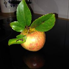 Une pomme pour la route?