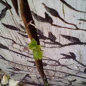 quand un tableau fleurit naturellement ; réponse à la devinette - crea.vlgomez.photographe et bricoleuse touche à tout.over-blog.com