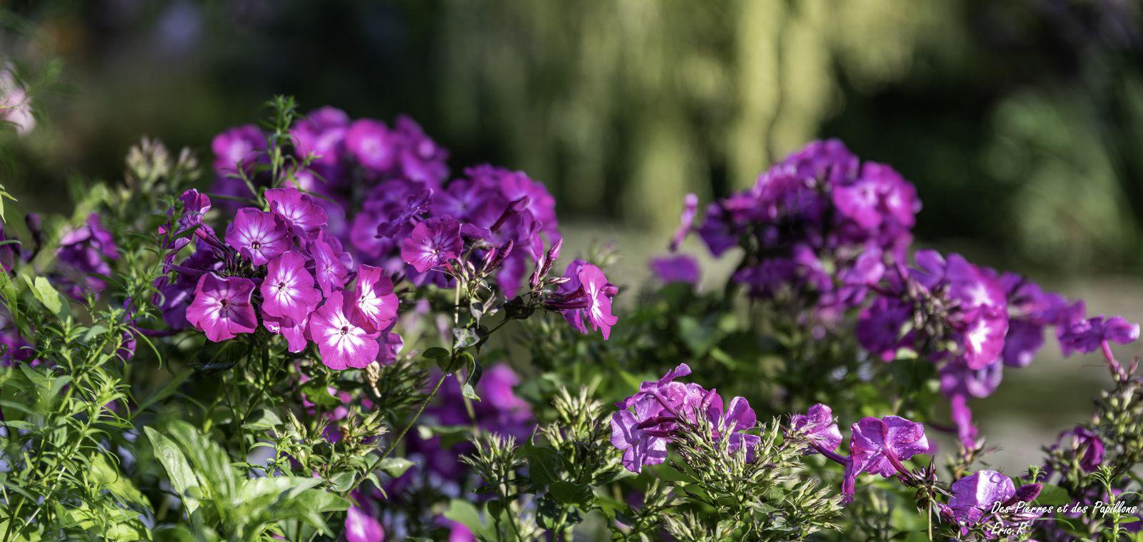 Les fleurs dans le jardin d'eau