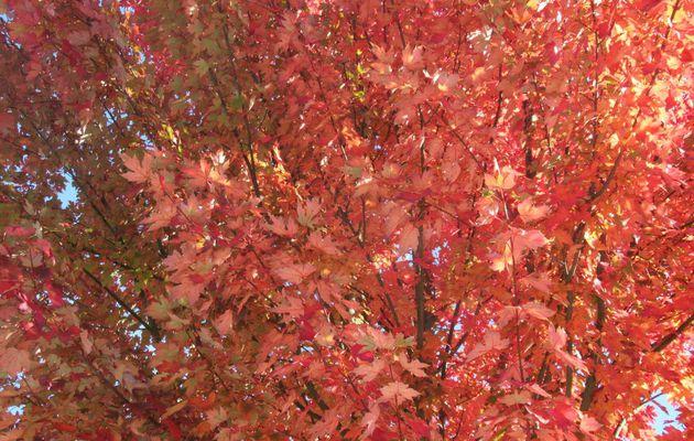 Herbst im Gärtle