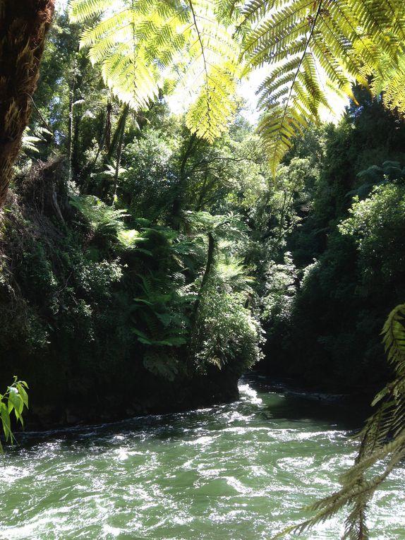 Jour 16 - Okere Falls - Rotorua - Te Puia et Pohutu Geyser