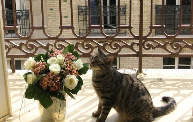 ^^Cat-Blogging avec Benny^^