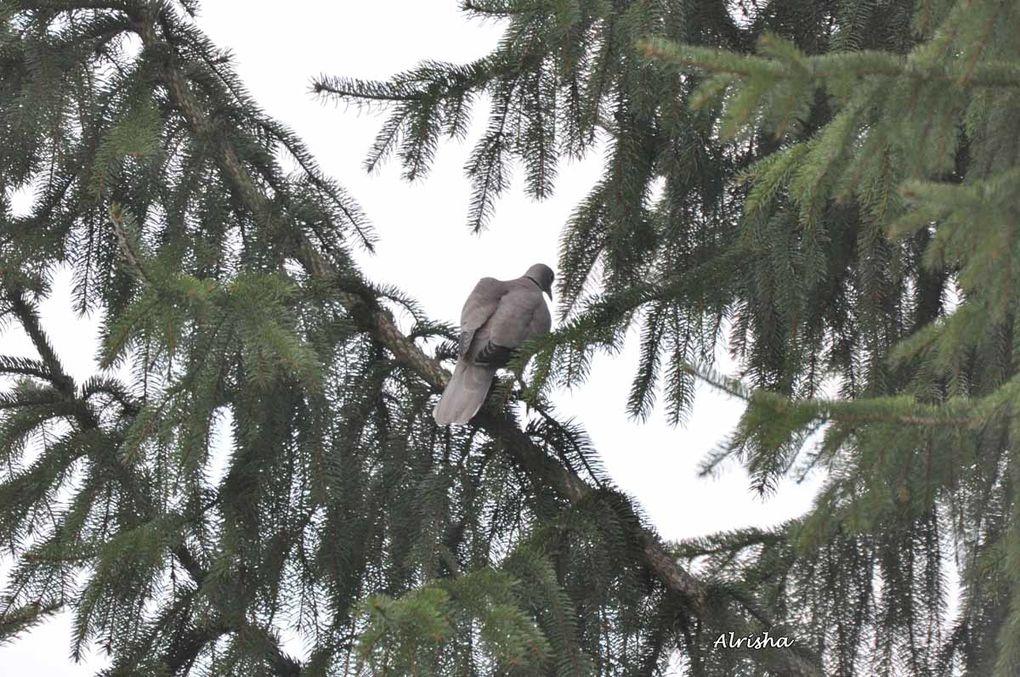 Pas facile de surprendre les oiseaux ! Au téléobjectif, j'ai réussi à en surprendre plus d'un. Mon expo de 2010 du 17 avril au 7 mai sera consacrée aux oiseaux des jardins, des bois et des bords de l'eau.