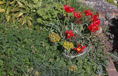 325 - Impression du jardin en mars