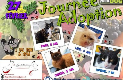 Journée adoptions chats point dog Brest 27/02
