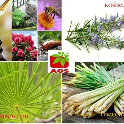 Finest Grade Essential oils- Improve your life Styles