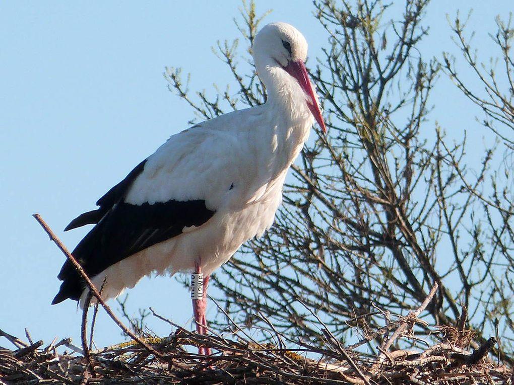 Balade au parc naturel du Méjean près de Montpellier.