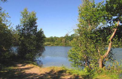 l'étang du Buissonnet