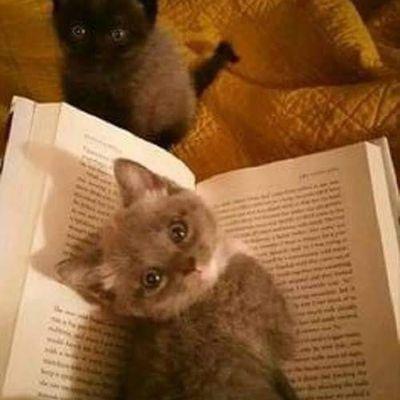 Bonne lecture chatons...