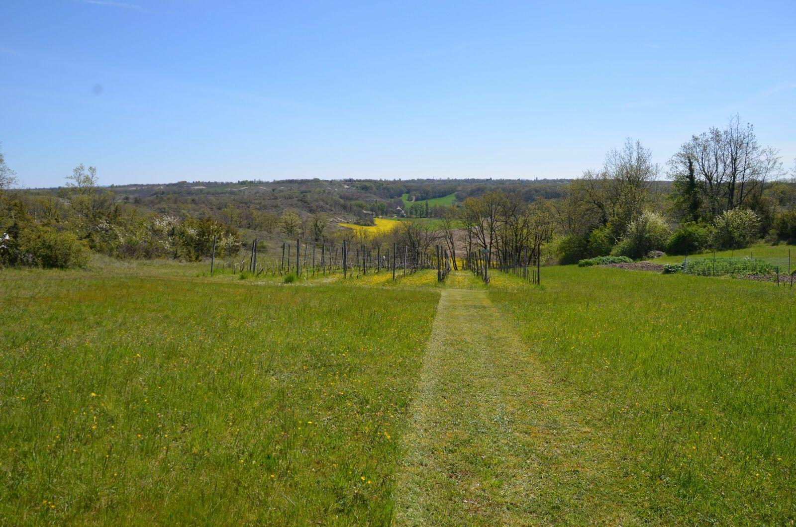 Domaine Les Cyprès - Avril - potager - vignes