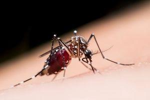 Misterbricolo dit adieu aux moustiques ...
