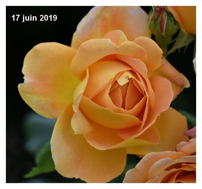 Un tour de jardin fleuri