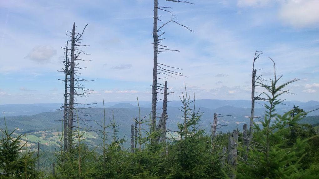 Superbe vue panoramique depuis le Petit Brézouard (1203 m) sur la Forêt Noire, les Vosges Bas-Rhinoises, les Hautes Vosges, le Jura et  on distingue au loin les Alpes Bernoises.