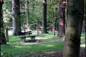 Bank zwischen Bäumen