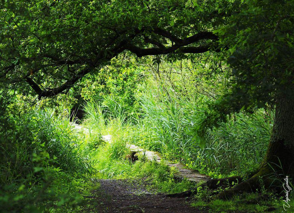 Le village de Gras, le pont de Gras et la nature