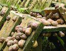 Initiation à l'élevage des escargots