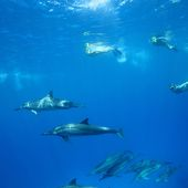Dolphins & Whales with us