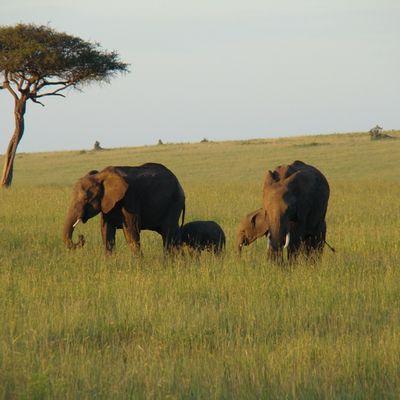 jour 5 - dernière journée de Safari