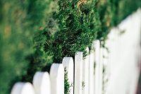 Brise-vue, les atouts d'une clôture en bois