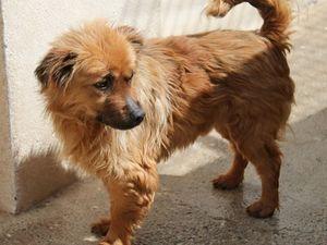 Pluto 3 ans un petit chien sans nom qui semeurt en Espagne