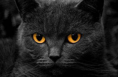 Chat - Regard - Photographie - Picture - Free