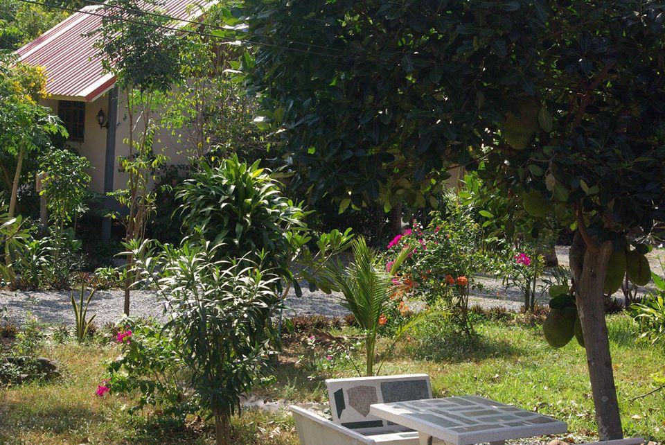 Areeya Resort - Fleurs du jour (18-24)