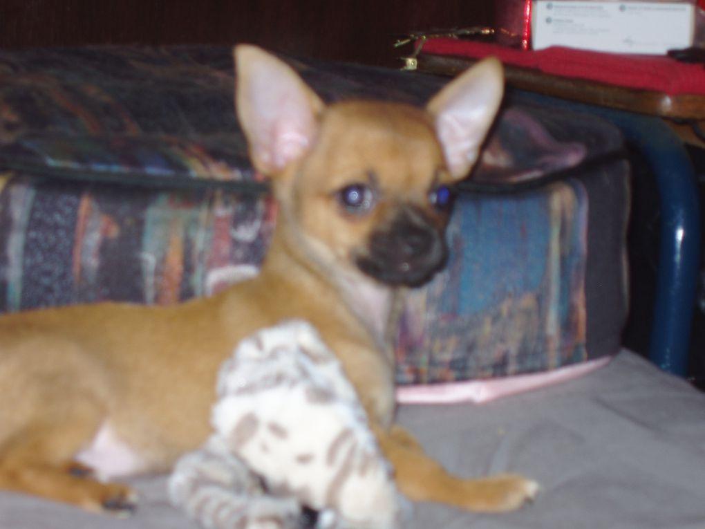 Album - Havana-la-Chihuahua