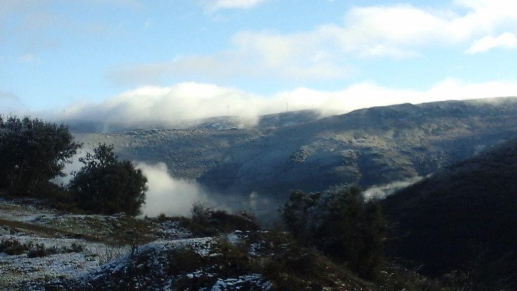 Un mouton au soleil, des Soucis sous la neige...