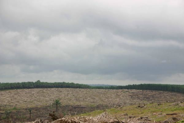 Nature intacte ou dévastée ... Dureté de la vie, partout.