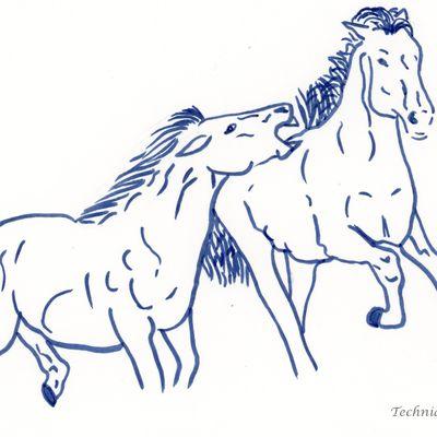 La violence chez le cheval : ce n'est pas normal
